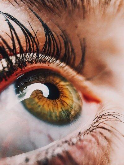 ZOOM SUR Les couleurs et leur perception